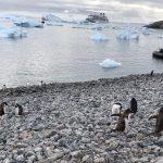Penguins, zodiac & ship