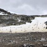 Penguin highways