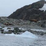 Seals, snow & ice