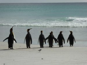 Penguin day at the beach